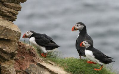 No Fly Cruises Investigates | Lundy Island